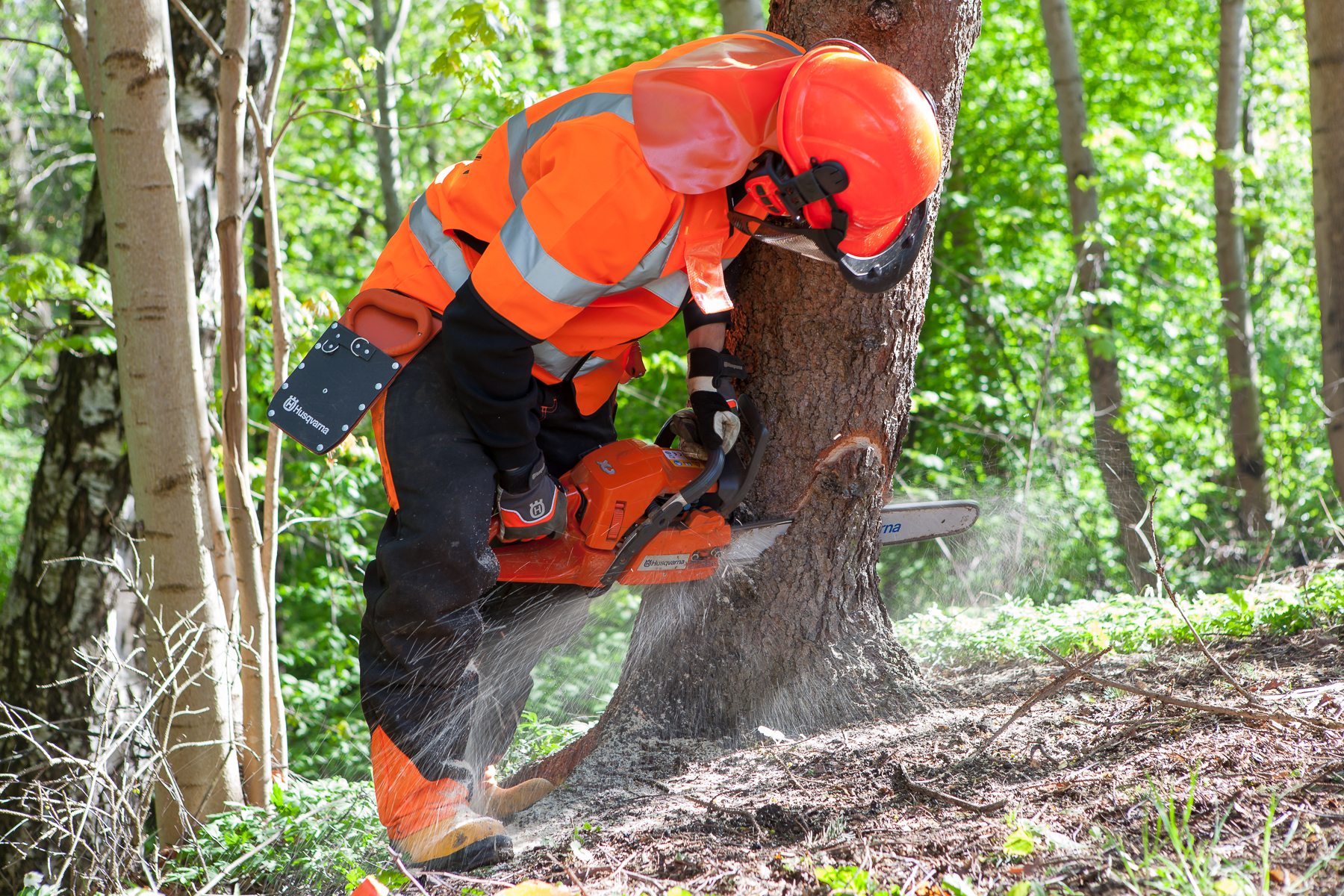 Trädfällning-1